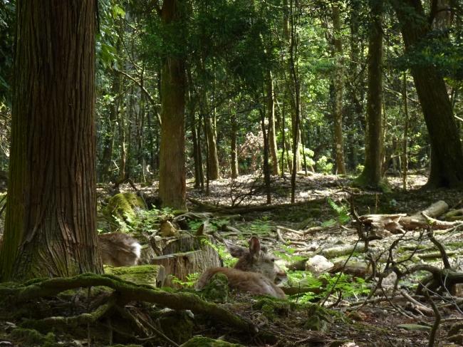 daim_forêt